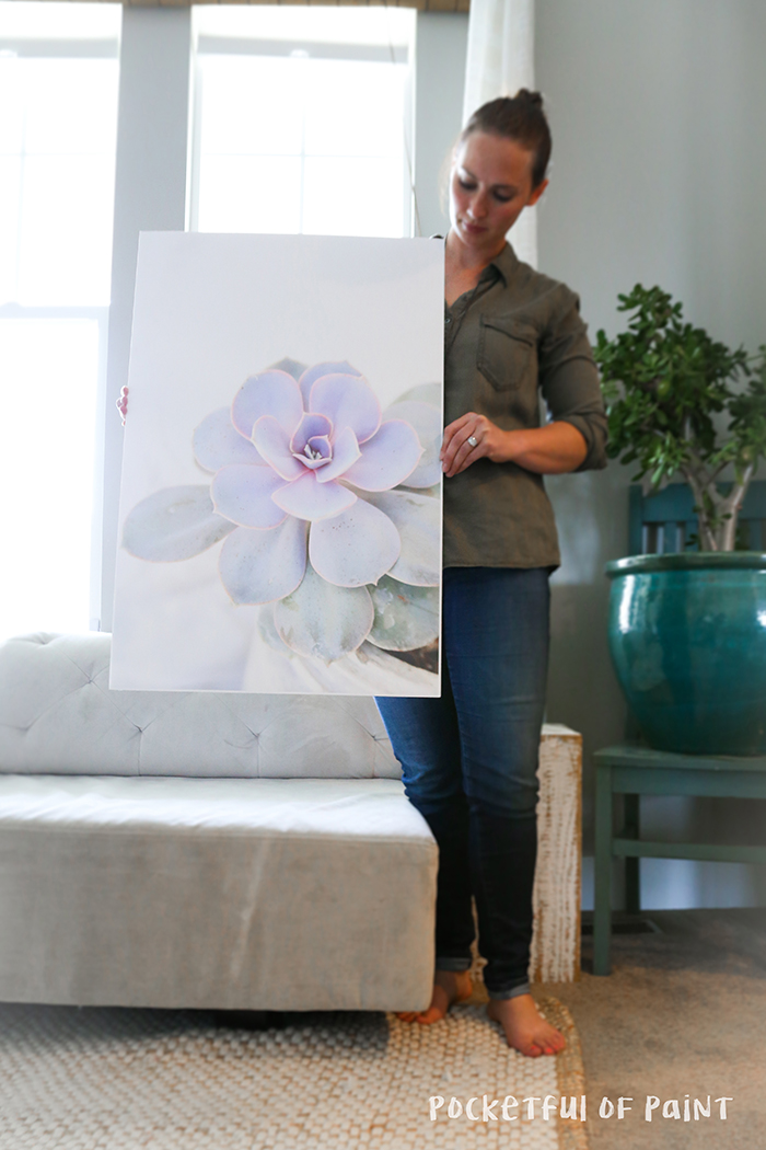Free downloadable succulents poster - pocketful of paint
