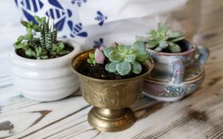 Thrift Store Succulent Planters